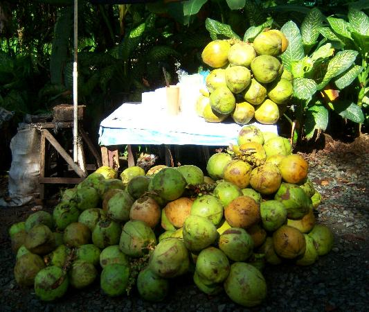 La Mesa Eco Park: Young Coconut for Refreshing Drink