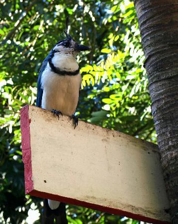 Hotel Villa Paraiso: magpie