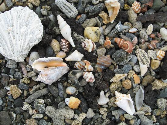 Hotel Rancho Luna: shells in sand on secluded beach nearby