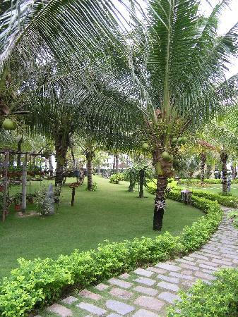 Sunny Beach Resort: lots of coconut trees