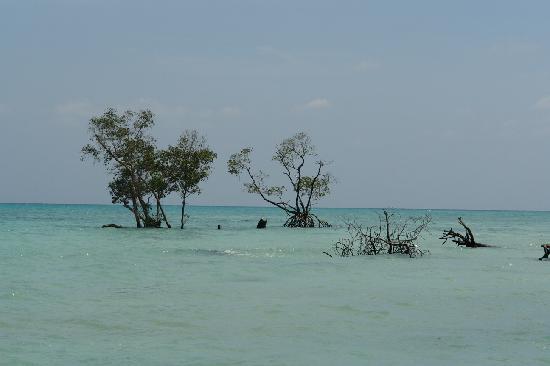Andaman and Nicobar Islands, India: maree haute
