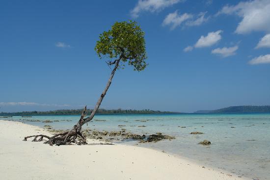 Andaman and Nicobar Islands, India: un arbre a la mer