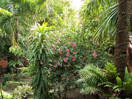 Orchids Resort: beautiful !