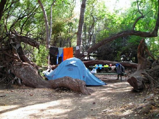 Camp Olowalu: A nice campsite, but too close to nearby overflowing trash and portable toilets.