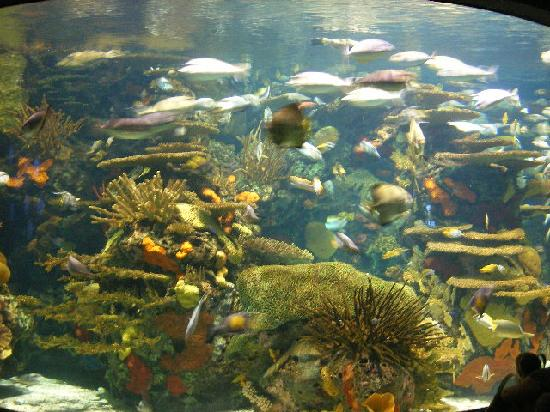 Myrtle Beach, SC: The aquarium