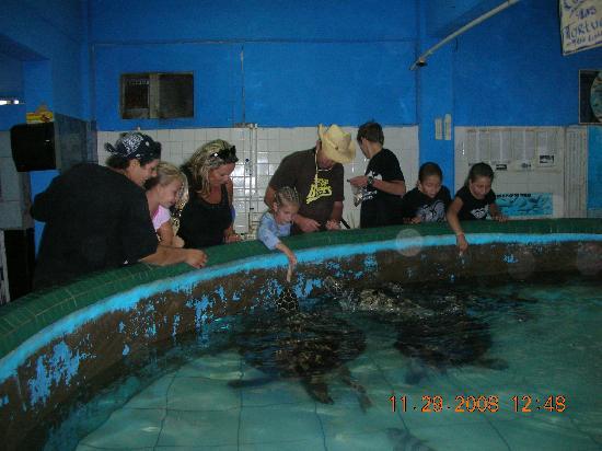 Cet-Mar Aquarium: Sea Turtle pool