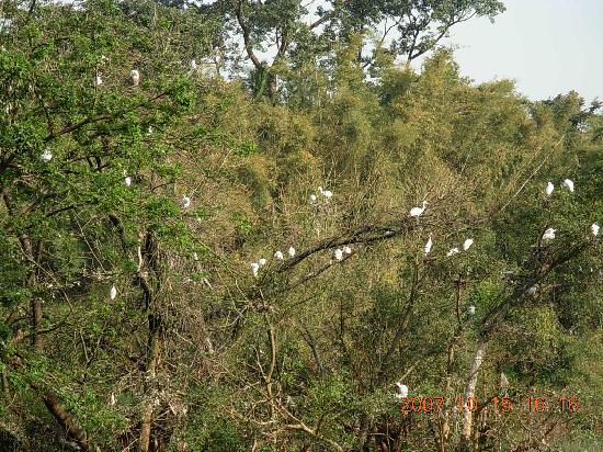 Shimoga Bird Santuary