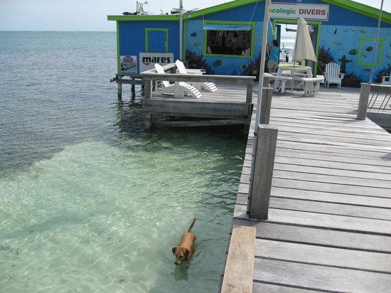Ecologic Divers: Diveshop