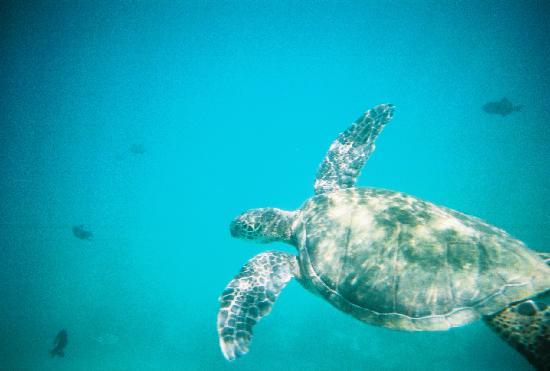 Kihei, HI: snorkelling