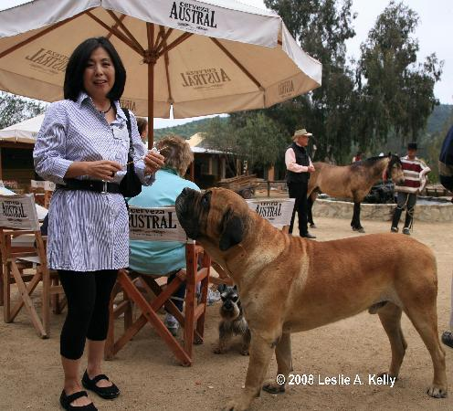 Puro Caballo's Lead Dog begs for food from a guest at Puro Caballo.
