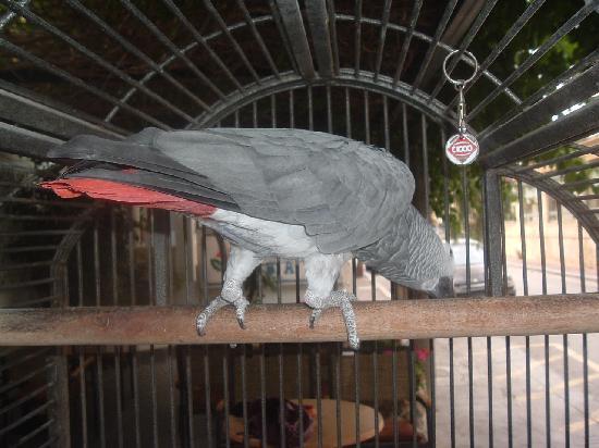 Elite Hotel: Jorgos the hotel parrot