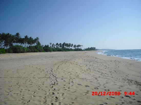 Mangrove Beach Cabanas & Chalets: Strand
