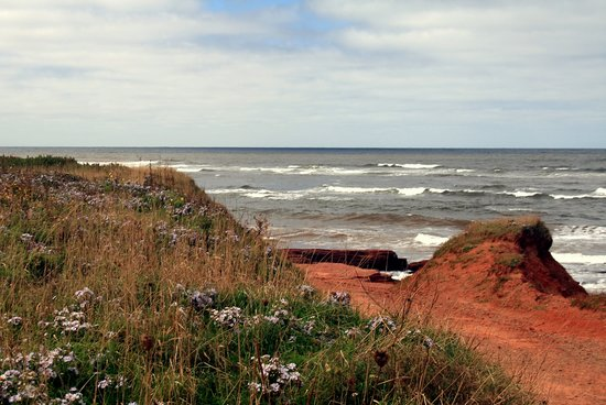 Brackley Beach, Canada: Asters and Tufted Rock