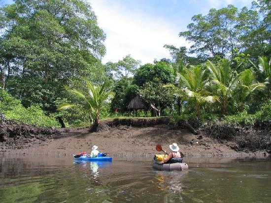 Hotel Las Olas Beach Resort: mangrove kayaking
