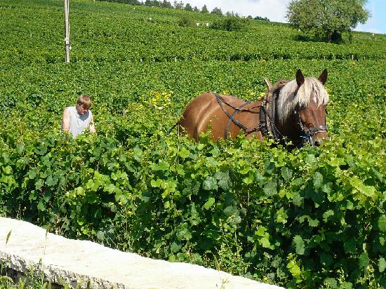 Burgundy, France: Vosne Romanee