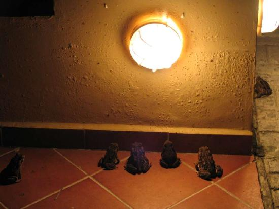Hotel Las Olas Beach Resort : watch the evening frog show as they wait for a flying dinner