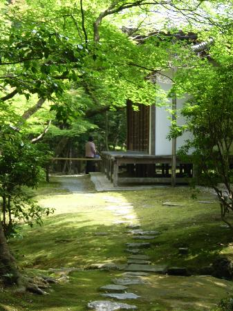 Saihoji Temple: もこもこですが、踏んではいけません
