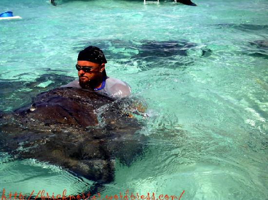 Grand Cayman: Chip handling the rays