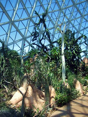 Mitchell Park Horticultural Conservatory (The Domes) : Cactus Plants and Dome