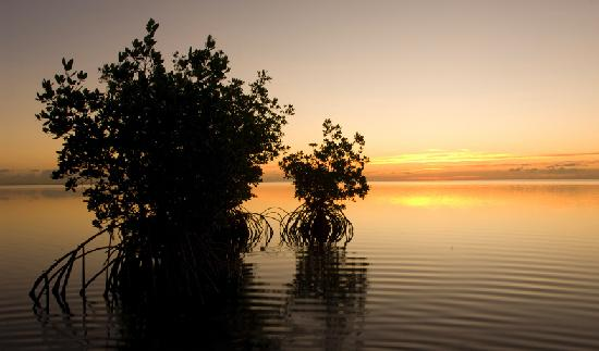 Matheson Hammock Park: sunrise-mangroves 12-06-08
