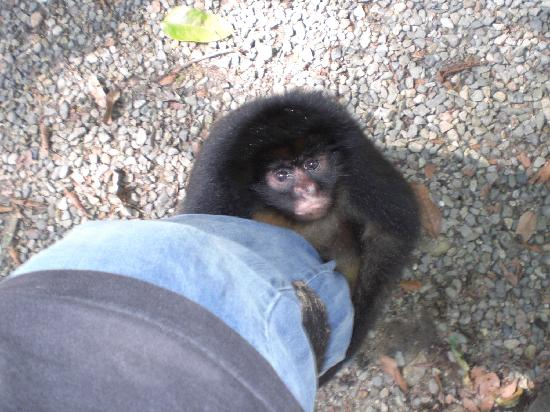 Tena, Ecuador: My new friend from the reserve across from Hostal Los Yutzos