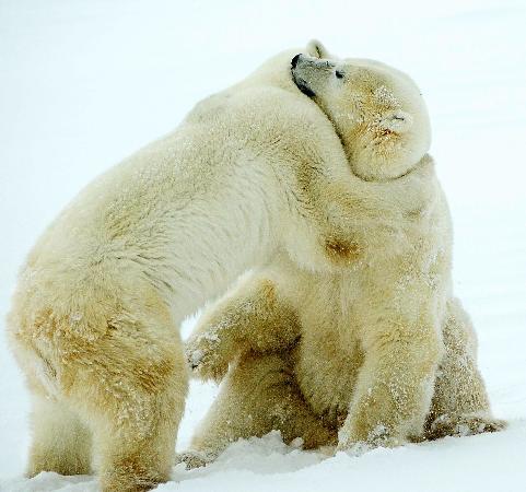 Churchill, Canada: Gimme a hug- I'm cold