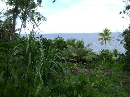 Mai Dive - Astrolabe Reef Resort: Mai Dive's organic vege garden with a view