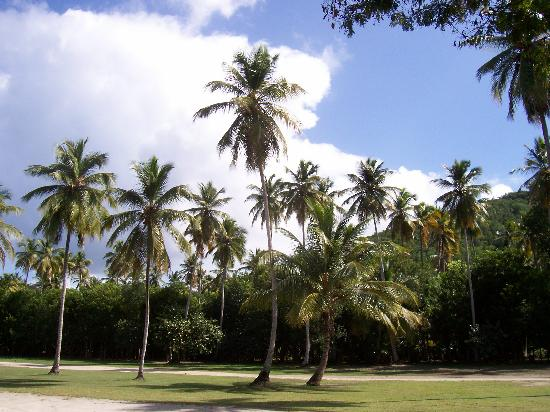 Area behind the beach, Magens bay