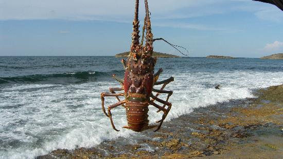 Salitre Meson Costero: Fresh local lobster