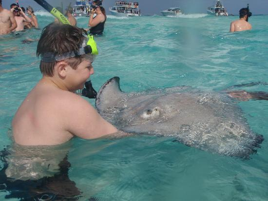 Grand Cayman: Holding a stingray