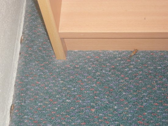 Comfort Inn Redleaf Resort:                   dead insects in room