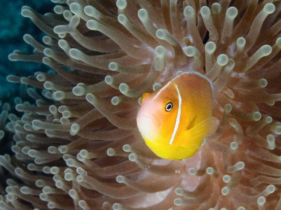 Papageno Resort : Friendly Fish