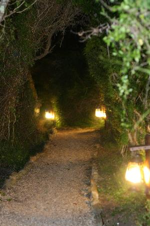 Lamplit path from our lodge to the main lodge