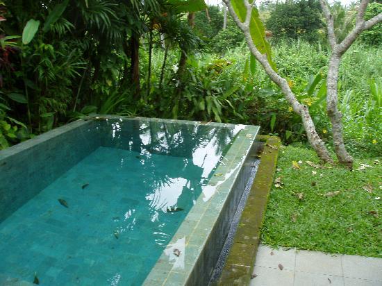 Maya Ubud Resort & Spa: Pool villa pool
