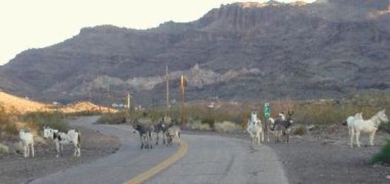 lots of donkeys
