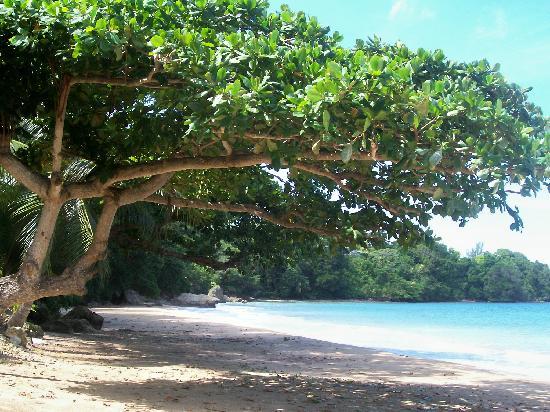 Golden Seas Beach Resort : nice beach
