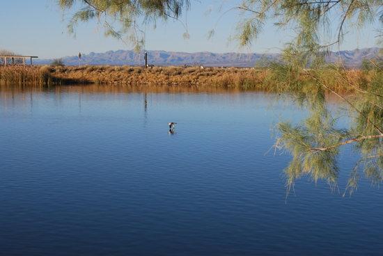Safford, Аризона: Roper Lake