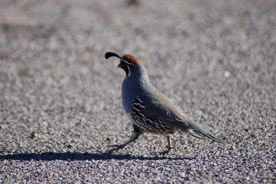 Roper Lake State Park: Wildlife