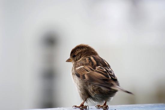 ClubHotel Riu Costa del Sol: Feathered friends