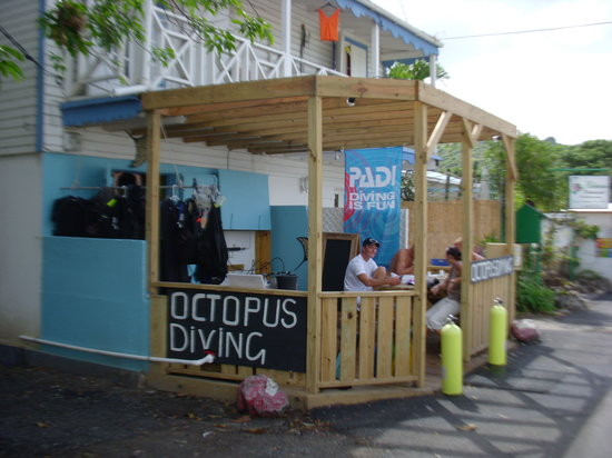 Octopus Diving: The Shop