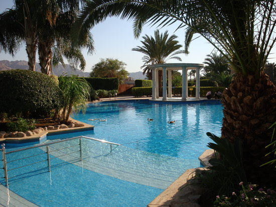 Movenpick Resort & Residences Aqaba: pool -  plus resident ducks taking a swim