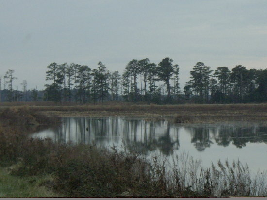 ‪Blackwater National Wildlife Refuge‬