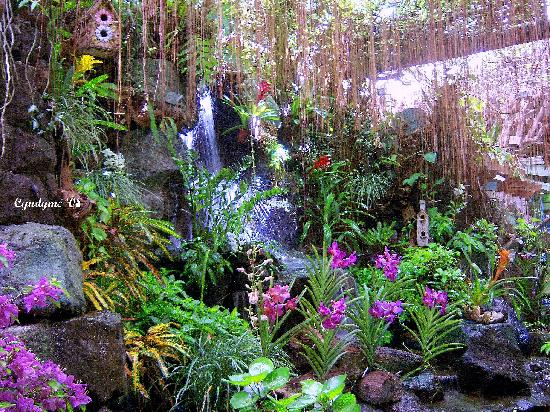Luzon, Filipiny: Indoor garden as restaurant centerpiece