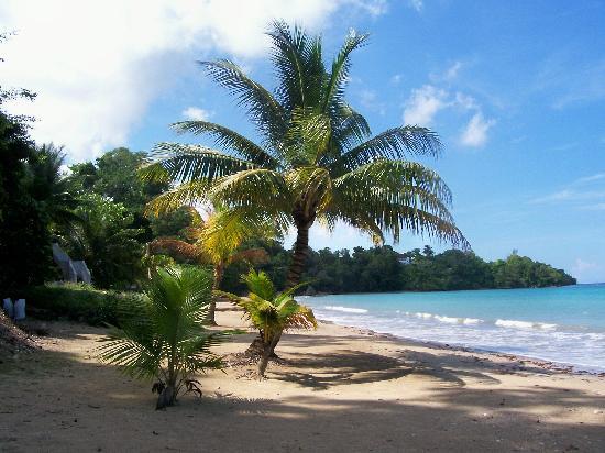 Golden Seas Beach Resort : beautiful beach