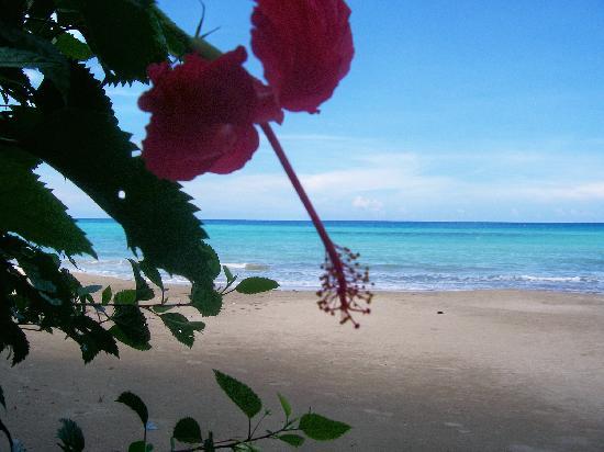 Golden Seas Beach Resort : lovely setting