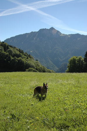 Leysin, Ελβετία: Kimba mon chien