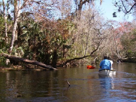 Wekiwa Springs State Park: Canoeing the spring run