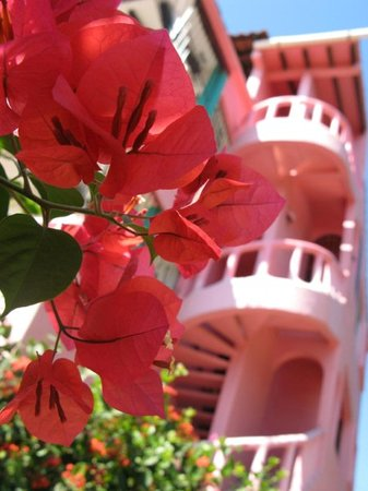 Flowers in Zihuatanejo