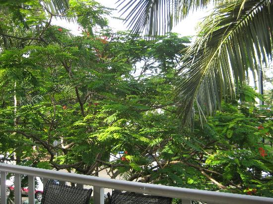 Sandy Beach Resort Noosa: Balcony view with fire tree
