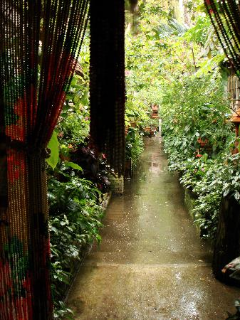 Suan Doi House Hotel & Resort : lush garden